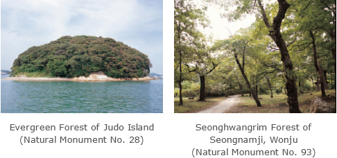 Evergreen Forest of Judo Island (Natural Monument No. 28) /Seonghwangrim Forest of Seongnamji, Wonju (Natural Monument No. 93)