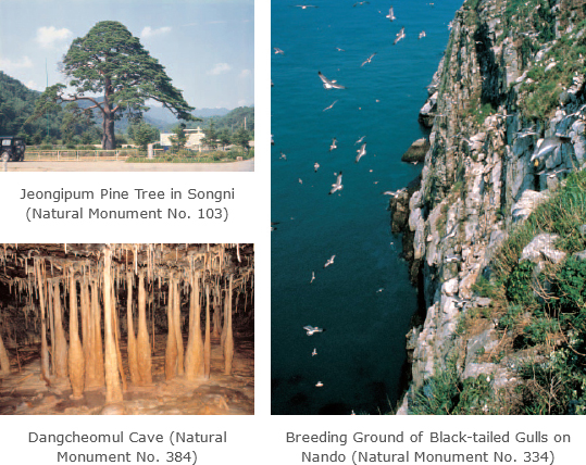 Jeongipum Pine Tree in Songni (Natural Monument No. 103), Dangcheomul Cave (Natural Monument No. 384), Breeding Ground of Black-tailed Gulls on Nando (Natural Monument No. 334)