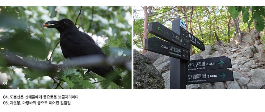 04. 도봉산은 산새들에게 풍요로운 보금자리이다. 05. 자운봉, 마당바위 등으로 이어진 갈림길