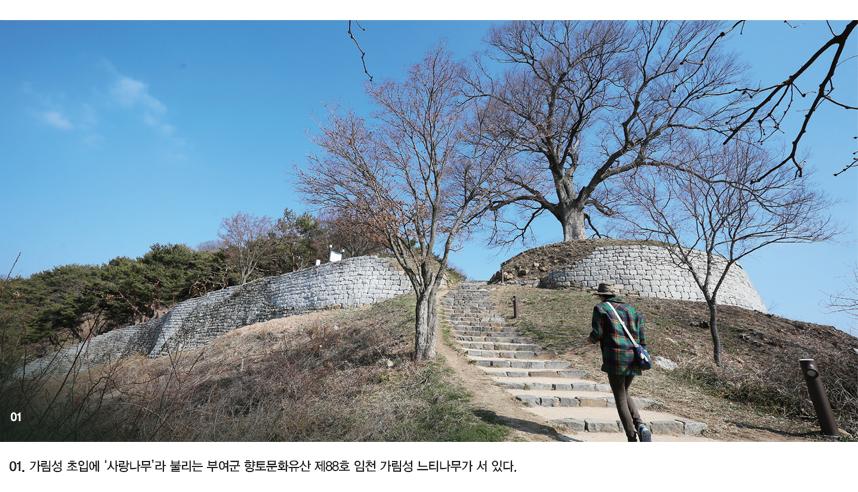 01. 가림성 초입에 '사랑나무'라 불리는 부여군 향토문화유산 제88호 임천 가림성 느티나무가 서 있다.
