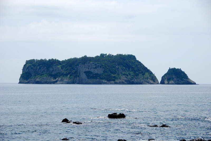 Natural Habitat of Spleenworts on Samdo Island, Jeju