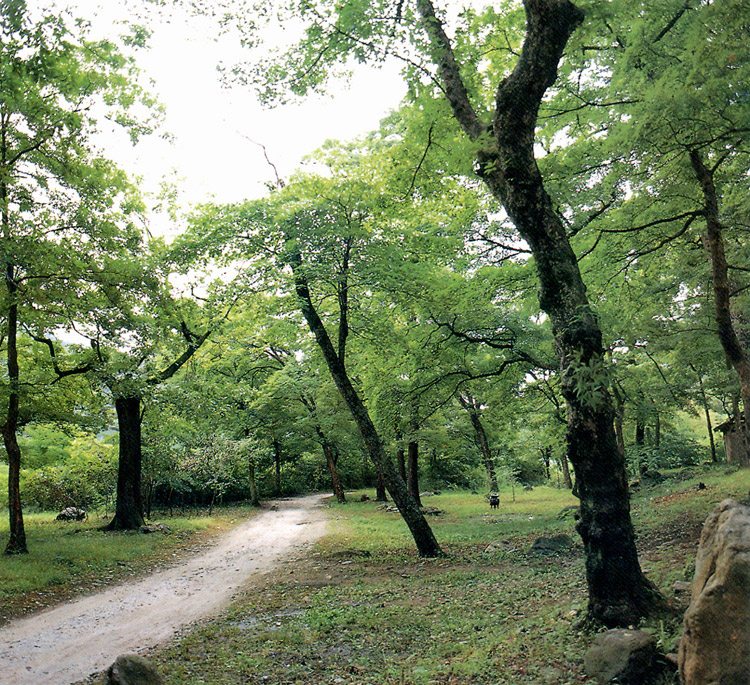 Turtelary forest in Seongnam-ri, Wonseong