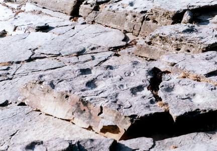 천전리공룡발자국화석