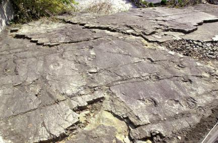 유곡동공룡발자국화석