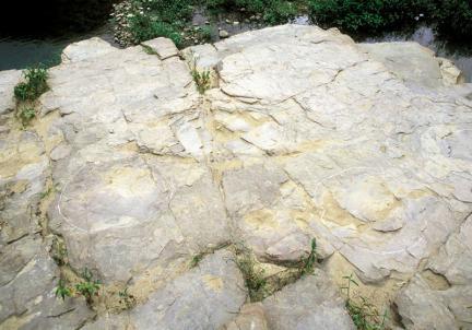 대곡리공룡발자국화석