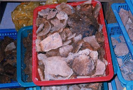 발굴된유적파편