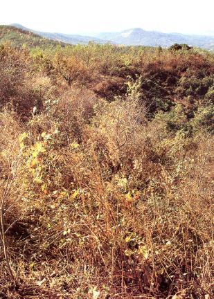 당성 풀숲