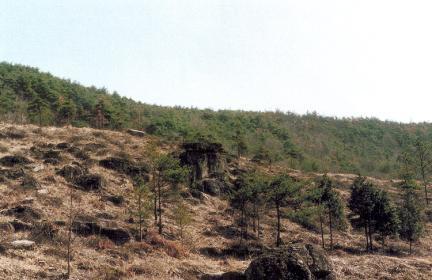 화순효산리지석묘