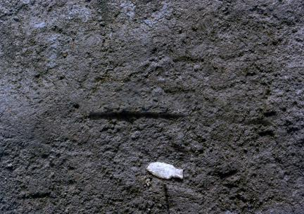 어형(魚形)유경식화살촉노출상태