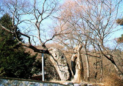 용궁사느티나무(할머니나무)