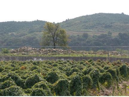 삼곶리돌무지무덤 원경