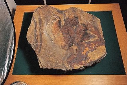 대붕광산퇴적암층에서 발견된 공룡발자국