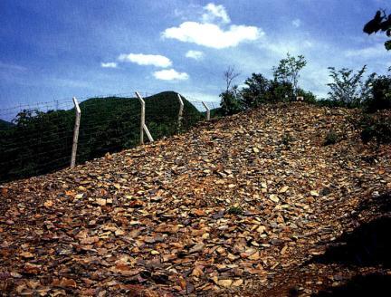 태백장성의삼엽충화석군락지