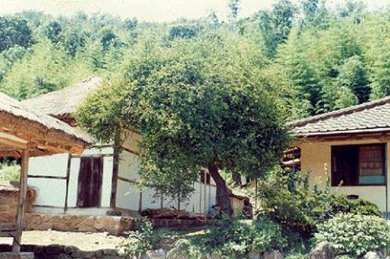 이병기생가의탱자나무