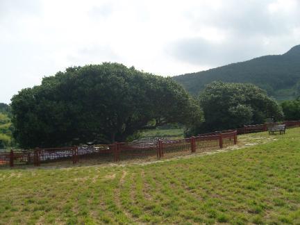 동백나무 주변정비작업 완료