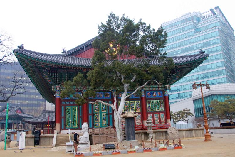 Lacebark Pine of Jogyesa Temple, Seoul