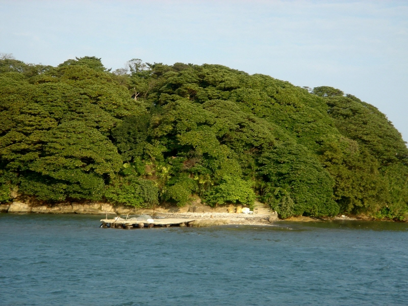 Evergreen Forest on Mokdo Island, Ulju