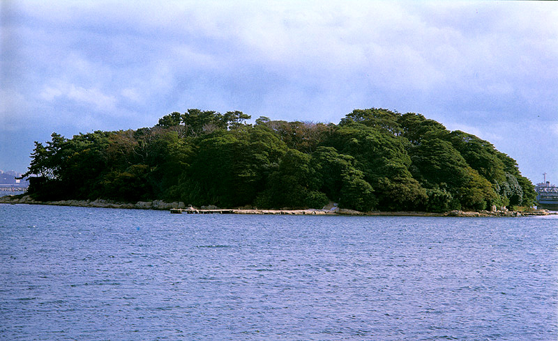 Evergreen forest in Mokdo island