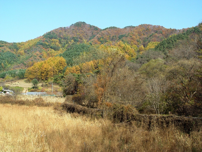 Tutelary Forest of Seongnam-ri, Wonseong