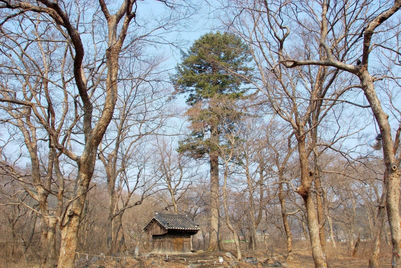 Tutelary Forest of Seongnam-ri, Wonseong