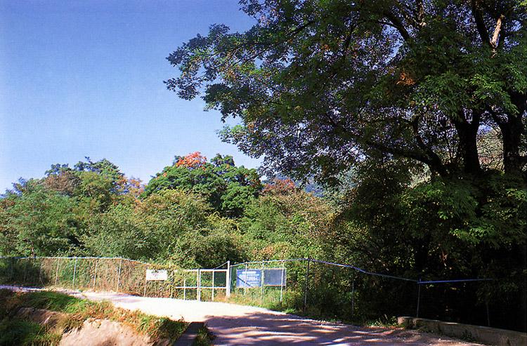 Turtelary forest in Seongnam-ri, Wonseong