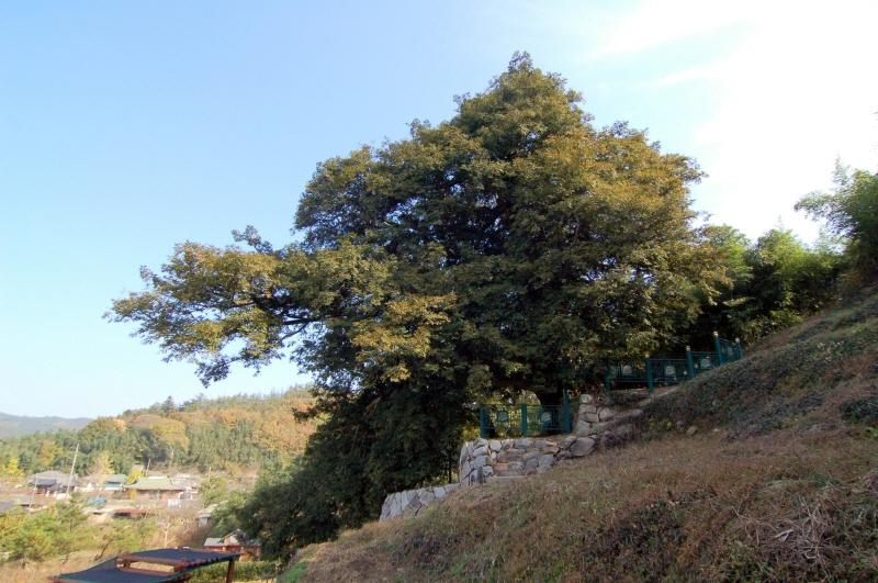 Kaya of Samin-ri, Gangjin