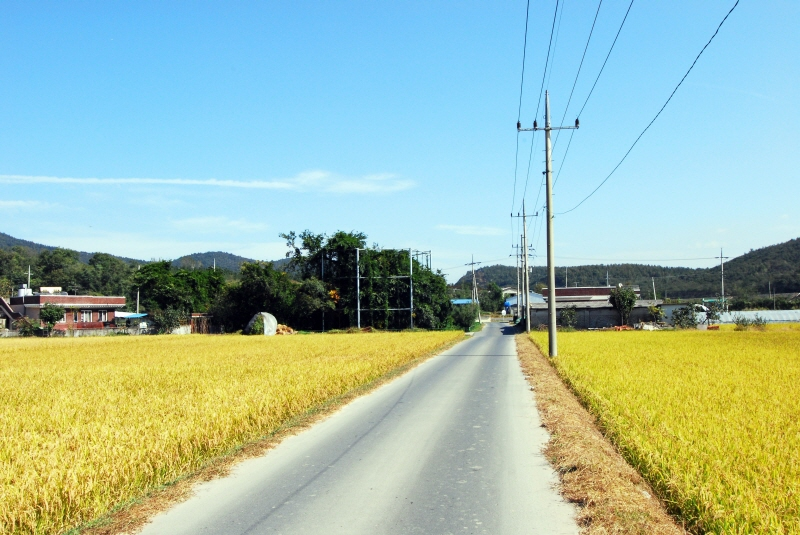 Wisteria of Oryu-ri, Gyeongju