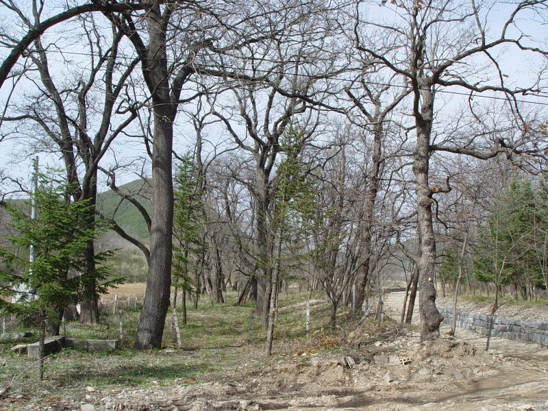 의성 사촌리 가로숲