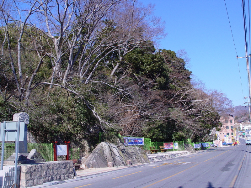 Evergreen Forest of Mijo-ri, Namhae