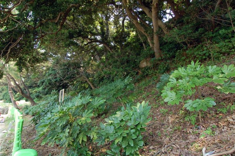 Natural Habitat of Formosa Rice Trees on Bijindo Island, Tongyeong