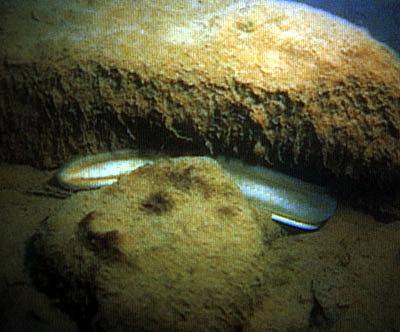 Eels in Jeju-do