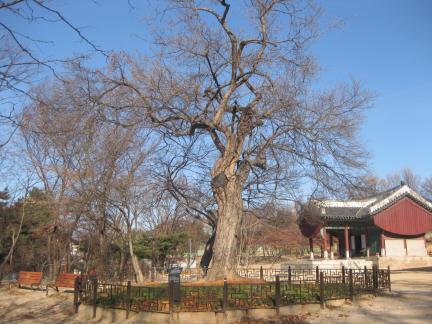 영휘원 산사나무의 가을(저작권:문화재청)