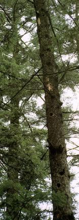 크낙새잠자리인나무구멍
