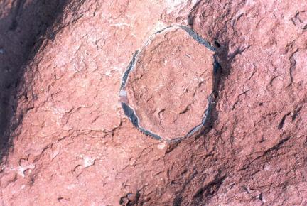 공룡알화석(껍질모습)