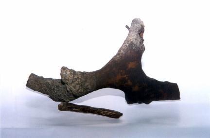 나무화석(규화목)