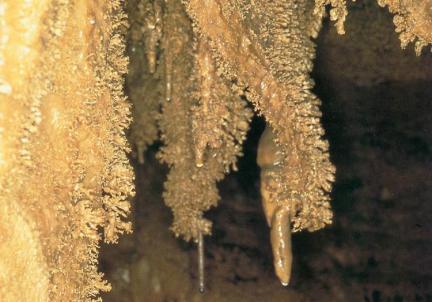 종유석과동굴산호(관음굴)