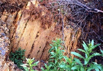 화석산지외부모습(화석이산출되는바위면)