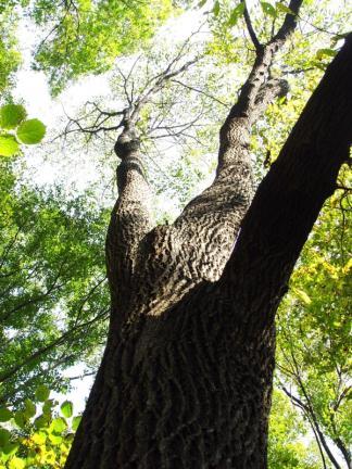 보은 속리산 망개나무