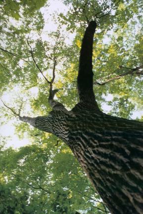 보은속리산의망개나무