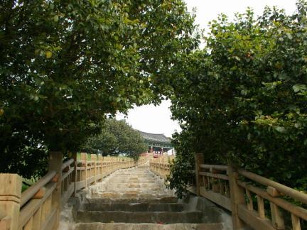 서천 마량리 동백나무 숲