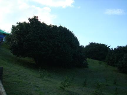 서천 마량리 동백나무숲
