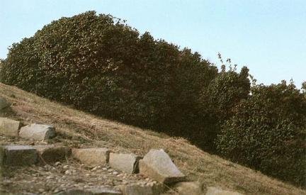 마량리동백나무숲
