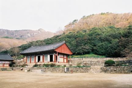 고창 선운사 동백나무 숲