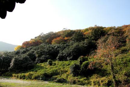 선운사 동백나무숲