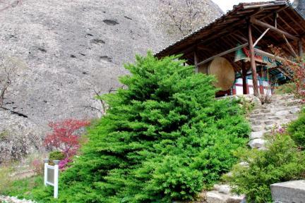 진안 마이산 줄사철나무군락