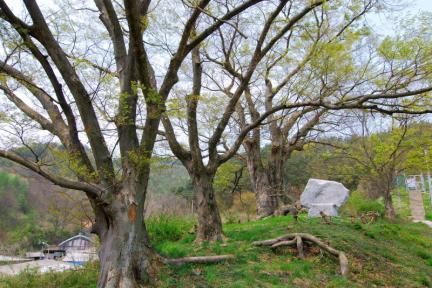 장수 봉덕리 느티나무