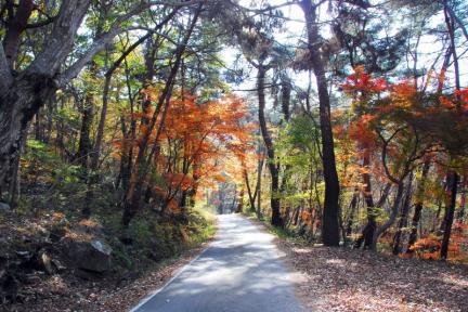 고창 문수사 단풍나무 숲