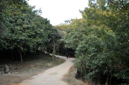 강진 백련사 동백나무 숲