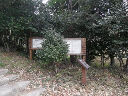 강진 백련사 동백나무숲