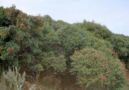 백련사의동백림